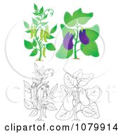 Clipart Eggplant And Pea Plants In Color And Outline Royalty Free Illustration
