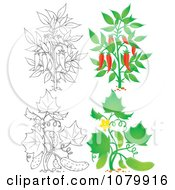 Chili Pepper And Cucumber Plants In Color And Outline