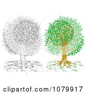 Clipart Colored And Outlined Mature Tree Royalty Free Illustration