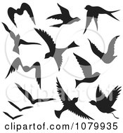 Silhouetted Black Flying Birds