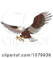 Clipart Flying Bald Eagle With Extended Talons Royalty Free Vector Illustration
