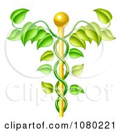 Clipart 3d Natural Vine And Gold Staff Caduceus Royalty Free Vector Illustration