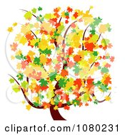 Tree With Green Orange Red And Yellow Autumn Leaves
