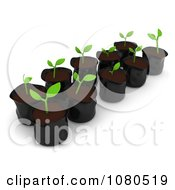 Clipart 3d Seedling Plants In Pods Royalty Free CGI Illustration