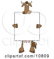 Brown Cow Holding And Standing Behind A Blank Sign Clipart Illustration