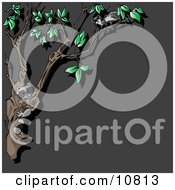 Curious Nocturnal Animals A Raccoon And Ferret In A Tree At Night Clipart Illustration