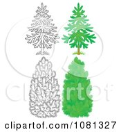 Clipart Set Of Outlind And Colored Evergreen Trees Royalty Free Illustration by Alex Bannykh