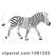 Clipart Profiled Zebra Walking Royalty Free Illustration by Alex Bannykh