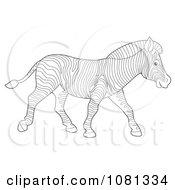 Clipart Outlined Zebra Walking Royalty Free Illustration by Alex Bannykh