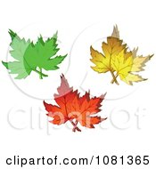 Green Yellow And Orange Autumn Maple Leaves