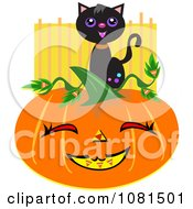 Black Cat On A Halloween Jackolantern