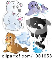 Clipart Polar Bear Seal Walrus And Orca Royalty Free Vector Illustration by visekart