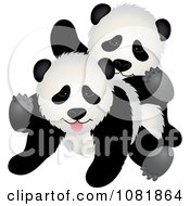 Two Playful Pandas