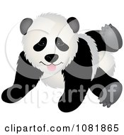 Cute Playful Panda Bear