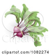 Clipart 3d Beetroot Beets Royalty Free Vector Illustration