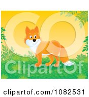 Handsome Fox In A Lush Landscape