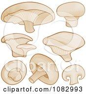 Woodcut Styled Mushrooms