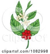 Clipart Coffee Plant With Berries And Flowers Royalty Free Vector Illustration