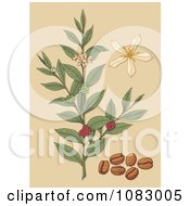 Coffee Plant With Beans Berries And Flowers
