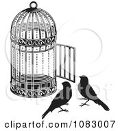 Black And White Birds By An Open Cage