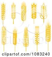 Clipart Golden Grains Royalty Free Vector Illustration