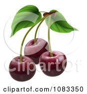 Clipart 3d Dark Red Cherries With Stems Royalty Free Vector Illustration