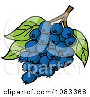 Clipart Bunch Of Blueberries And Leaves Royalty Free Vector Illustration by LaffToon