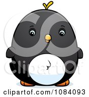 Clipart Chubby Penguin Chick Royalty Free Vector Illustration