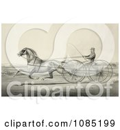 Harness Racer Driving A Trotting Horse Royalty Free Stock Illustration