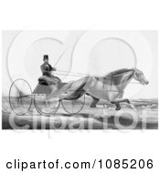 Man Robert Bonner In A Cart Being Pulled By A Running Horse Royalty Free Stock Illustration