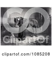 Woman Feeding And Leaning Against A Horse While A Dog Watches And A Kitten Plays A Man Standing In The Background Royalty Free Stock Illustration