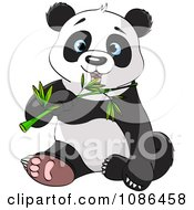 Cute Panda Sitting And Chewing On Bamboo