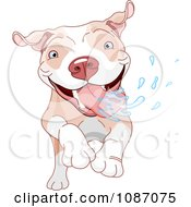 Excited Pit Bull Dog Running And Drooling