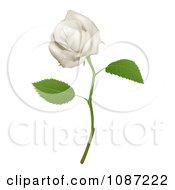3d Goregous White Long Stemmed Rose