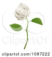 Clipart 3d Goregous White Long Stemmed Rose Royalty Free Vector Illustration by AtStockIllustration