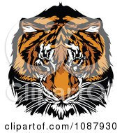 Clipart Tiger Mascot Staring Intensely Royalty Free Vector Illustration by Chromaco