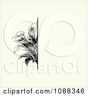 Clipart Vintage Black Calla Lily Flower And Beige Invitation Background Royalty Free Vector Illustration by BestVector