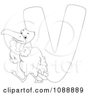 Outlined V Is For Vulture Coloring Page