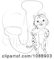 Clipart Outlined J Is For Jaguar Coloring Page Royalty Free Vector Illustration