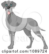 Clipart Cute Blue Great Dane Dog Standing Royalty Free Vector Illustration by Pushkin