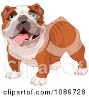 Clipart Cute English Bulldog Standing Royalty Free Vector Illustration by Pushkin