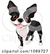 Clipart Cute Boston Terrier Dog Standing Royalty Free Vector Illustration by Pushkin