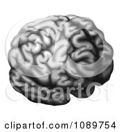 Clipart Grayscale Brain Royalty Free Vector Illustration