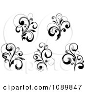 Black And White Flourish Motif Design Elements 4