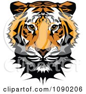 Clipart Cute Tiger Mascot Head Royalty Free Vector Illustration by Chromaco #COLLC1090206-0173