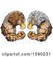Bald Eagle And Falcon Mascots Facing Off