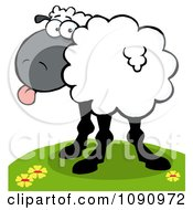 Clipart White Sheep Looking Back And Sticking Its Tongue Out Royalty Free Vector Illustration