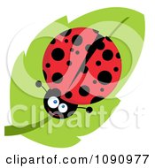 Clipart Smiling Lady Bug On A Leaf Royalty Free Vector Illustration
