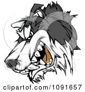 Clipart Snarling Husky Mascot Head Royalty Free Vector Illustration by Chromaco