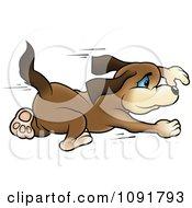 Brown Puppy Running